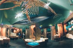 Le centre d'interprétation des mammifères marins   © CIMM