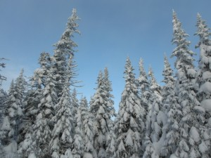 Snowed trees in Gaspésie National Park  © Jean-Pascal Côté