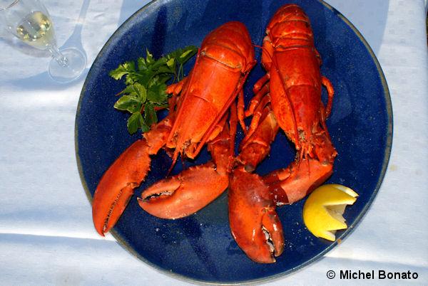 Le homard des Îles de la Madeleine
