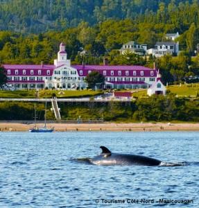 Baleine au large de la ville de Tadoussac