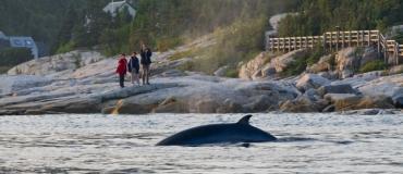 L'observation de la faune au Québec maritime