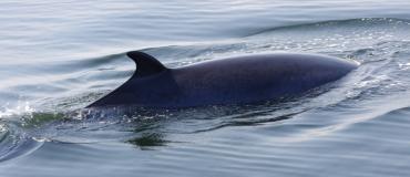 Garantie baleine exclusive