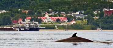 À la rencontre des baleines dans le Québec maritime