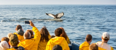 Wildlife Observation: The Best Places to Add to Your Itinerary!