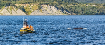 What to Expect When Whale Watching in Eastern Québec