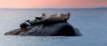 Wildlife Watching: 7 Fun Outing Ideas!