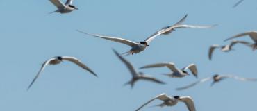 4 circuits de rêve pour les amateurs d'ornithologie