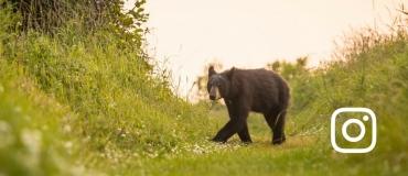 Top 3 Wildlife Photos on Instagram