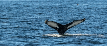 Whale and Wildlife Observation: 5 Experiences Not to Miss!