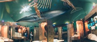 Un préambule à l'observation des baleines