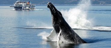 Whale-Watching Sites in the Maritime Regions of Québec