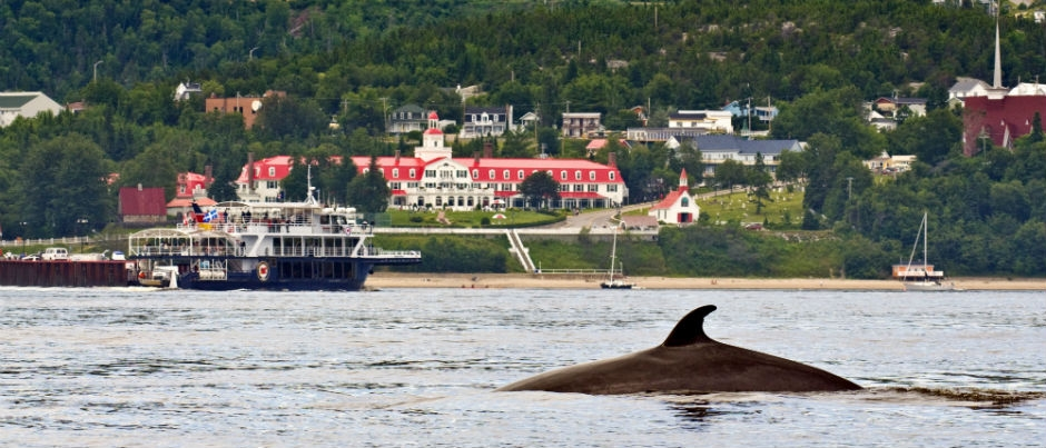 Whale Watching in the Maritime Regions of Québec