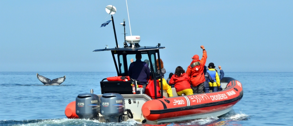Voyage sur la Côte-Nord : Excursion aux baleines en Zodiac avec Croisières Essipit
