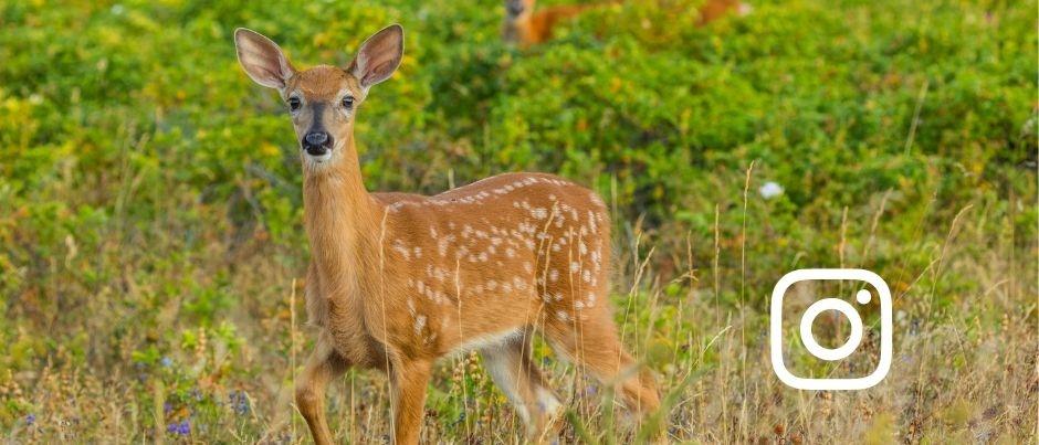 Top 3 : Vos photos de faune en vedette