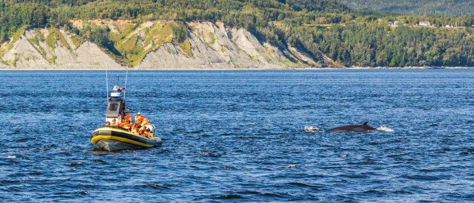 Je vais voir les baleines : à quoi dois-je m'attendre?