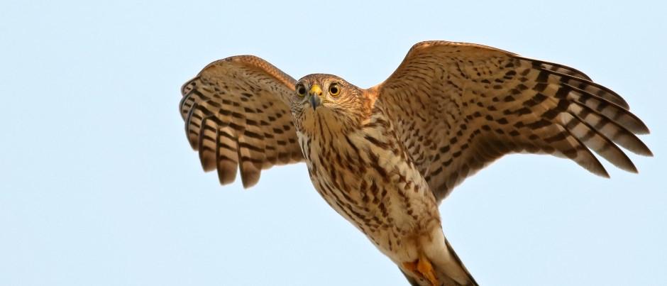 Ornithologie en Côte-Nord : de belles observations à faire en automne