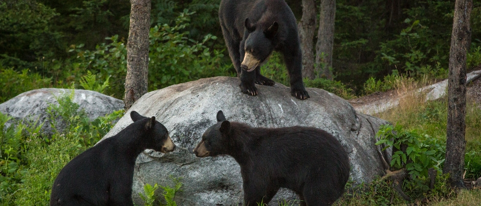 Places to Visit to Learn More About Wildlife in Eastern Québec