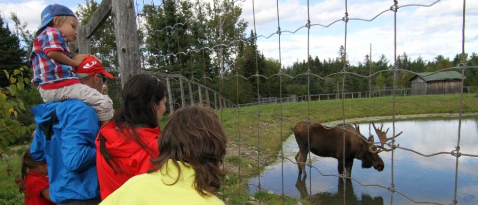 Le Bioparc de la Gaspésie : Observer les animaux au grand plaisir des petits… et des grands