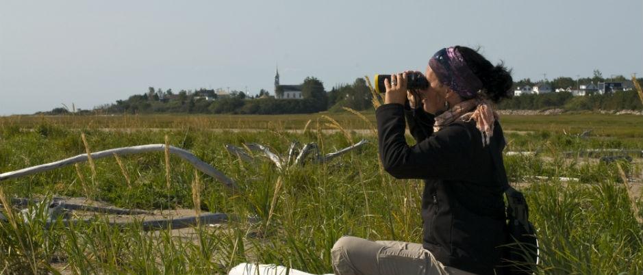 Les oiseaux du Québec maritime : les meilleurs lieux d'observation
