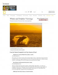 Top 10 Whale and Dolphin Viewing