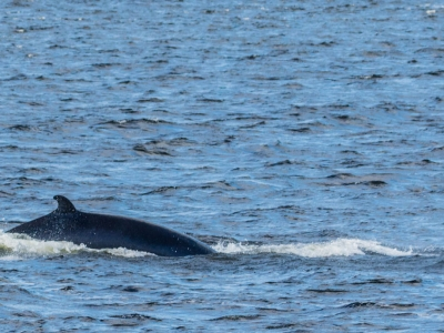 Whale-Watching Cruise and Black Bear Observation Passport
