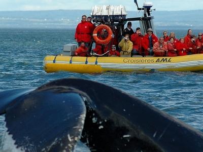 Forfait baleines et nature