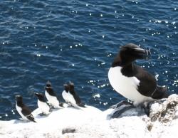 Observation d'oiseaux dans l'archipel