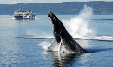 Whale and Wildlife Watching